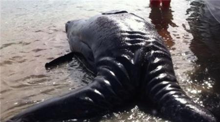 男子沙滩上发现两尾怪物,好奇围观后,吓得拔腿就跑!